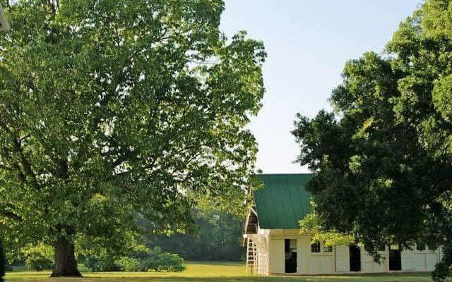 Redcliffe Plantation's Evolving Landscape