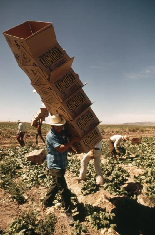 9_Mexican Farm Worker